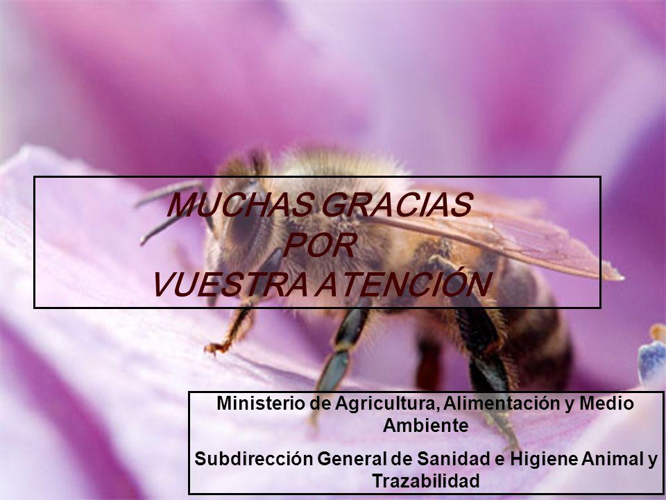 MUCHAS GRACIAS POR VUESTRA ATENCIÓN Ministerio de Agricultura, Alimentación y Medio Ambiente Subdirección General de Sanidad e Higiene Animal y Trazab