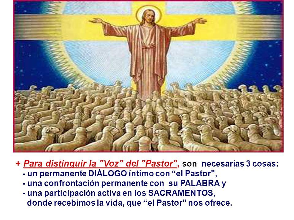 En las comunidades cristianas, tenemos personas que presiden y animan. - ¿Aceptamos a esas personas que han recibido esa misión de Cristo y de la Igle