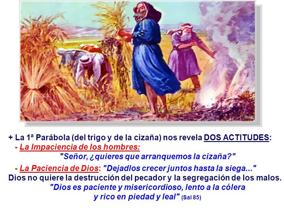 + La 1ª Parábola (del trigo y de la cizaña) nos revela DOS ACTITUDES: - La Impaciencia de los hombres: Señor, ¿quieres que arranquemos la cizaña? - La Paciencia de Dios: Dejadlos crecer juntos hasta la siega... Dios no quiere la destrucción del pecador y la segregación de los malos.