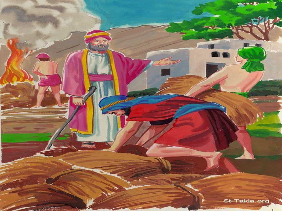 + La 1ª Parábola (del trigo y de la cizaña) nos revela DOS ACTITUDES: - La Impaciencia de los hombres: