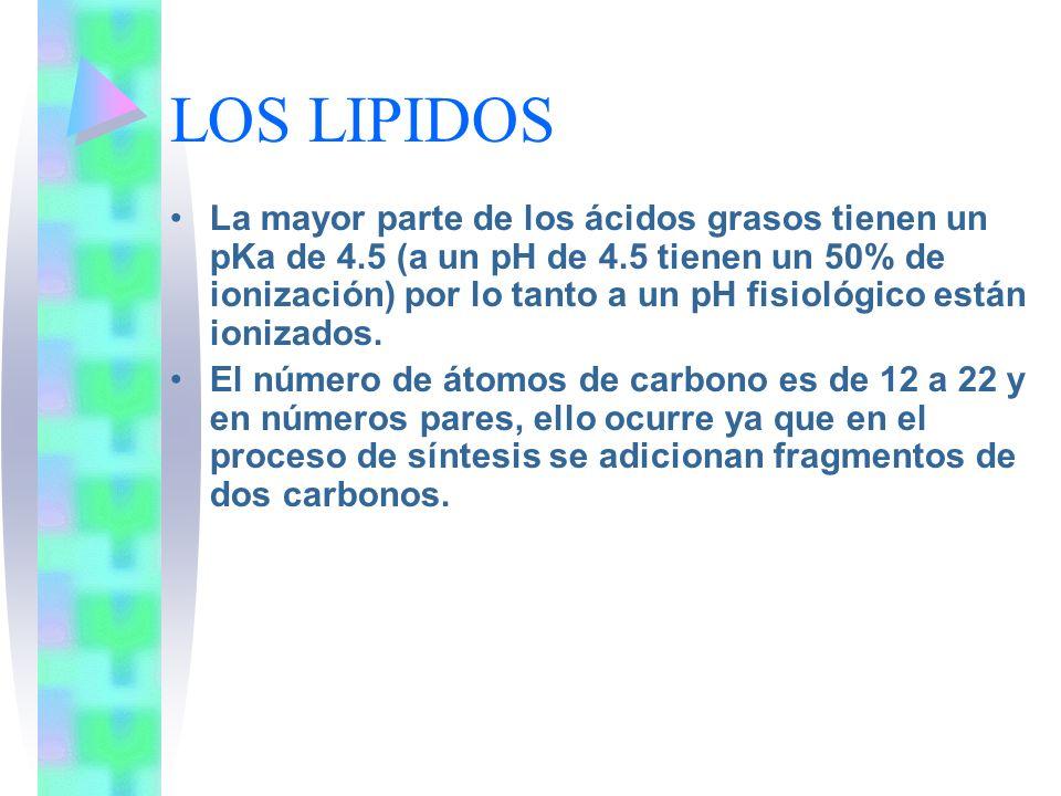 LOS LIPIDOS La mayor parte de los ácidos grasos tienen un pKa de 4.5 (a un pH de 4.5 tienen un 50% de ionización) por lo tanto a un pH fisiológico est