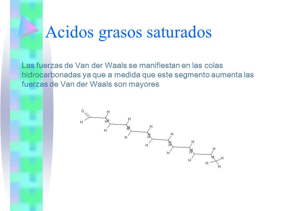 Acidos grasos saturados Las fuerzas de Van der Waals se manifiestan en las colas hidrocarbonadas ya que a medida que este segmento aumenta las fuerzas