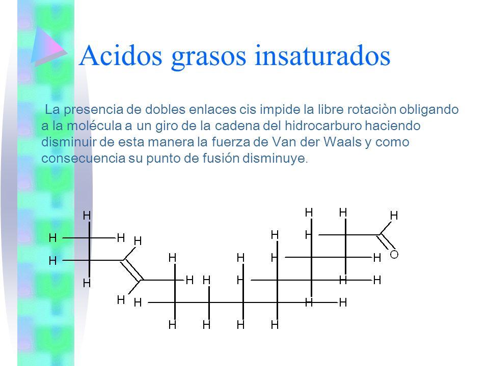 Acidos grasos insaturados La presencia de dobles enlaces cis impide la libre rotaciòn obligando a la molécula a un giro de la cadena del hidrocarburo