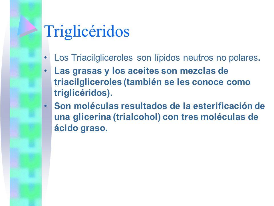 Triglicéridos Los Triacilgliceroles son lípidos neutros no polares. Las grasas y los aceites son mezclas de triacilgliceroles (también se les conoce c