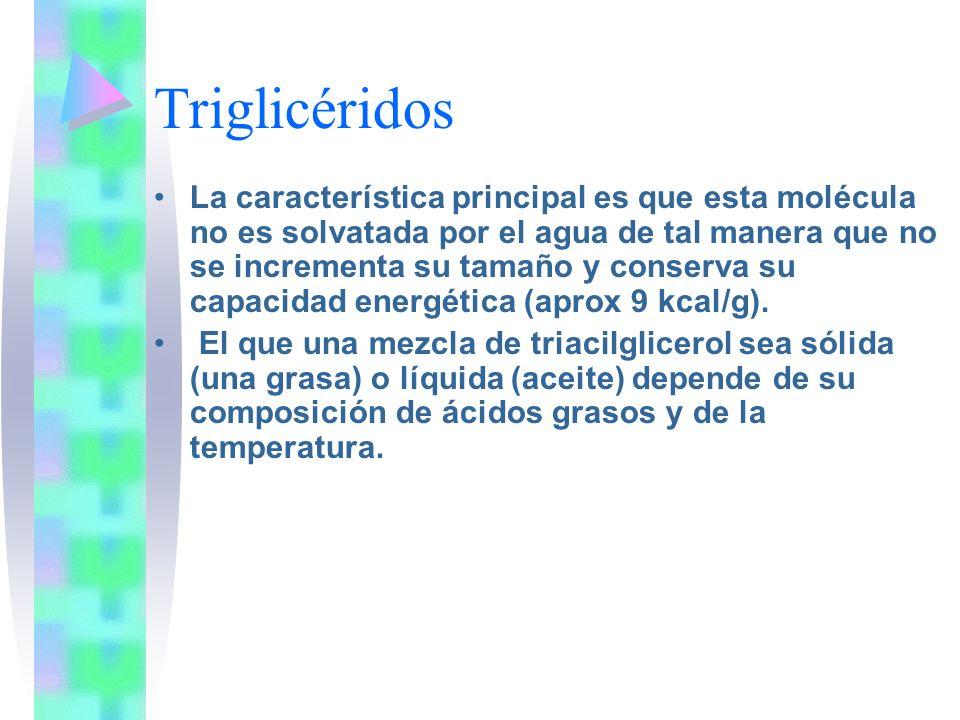 Triglicéridos La característica principal es que esta molécula no es solvatada por el agua de tal manera que no se incrementa su tamaño y conserva su