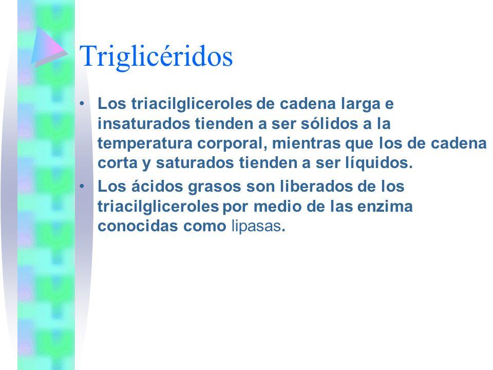 Triglicéridos Los triacilgliceroles de cadena larga e insaturados tienden a ser sólidos a la temperatura corporal, mientras que los de cadena corta y