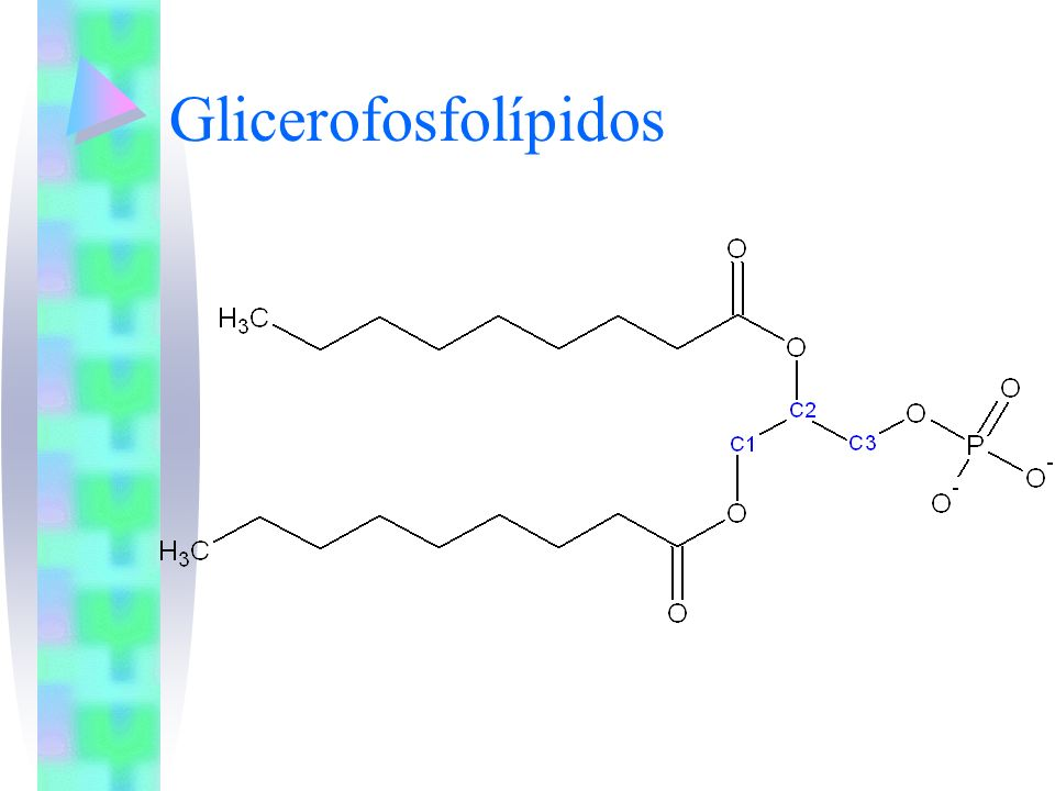 Glicerofosfolípidos