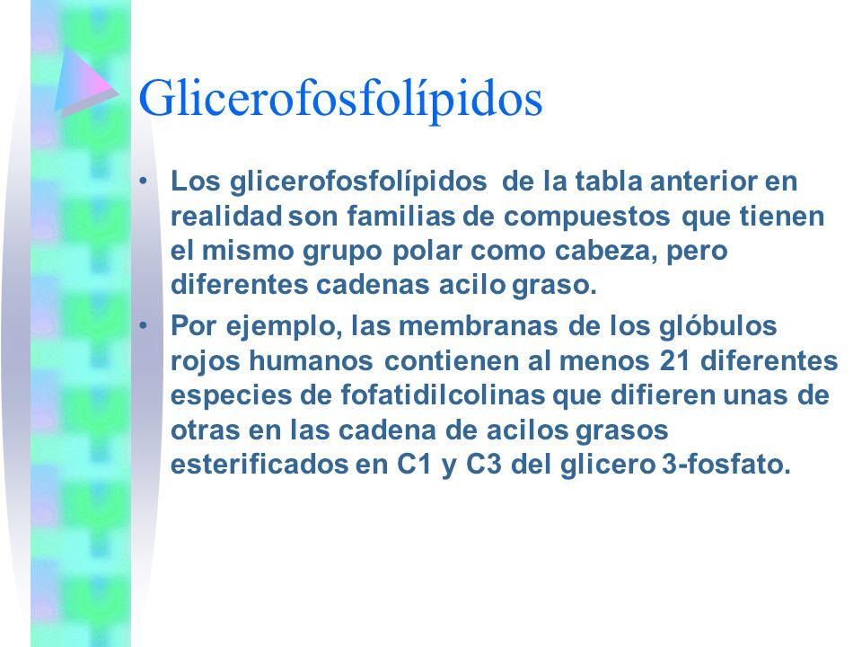 Glicerofosfolípidos Los glicerofosfolípidos de la tabla anterior en realidad son familias de compuestos que tienen el mismo grupo polar como cabeza, p