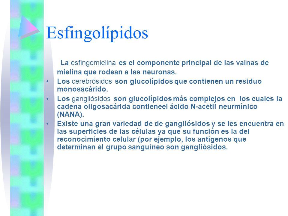 Esfingolípidos La esfingomielina es el componente principal de las vainas de mielina que rodean a las neuronas. Los cerebrósidos son glucolípidos que