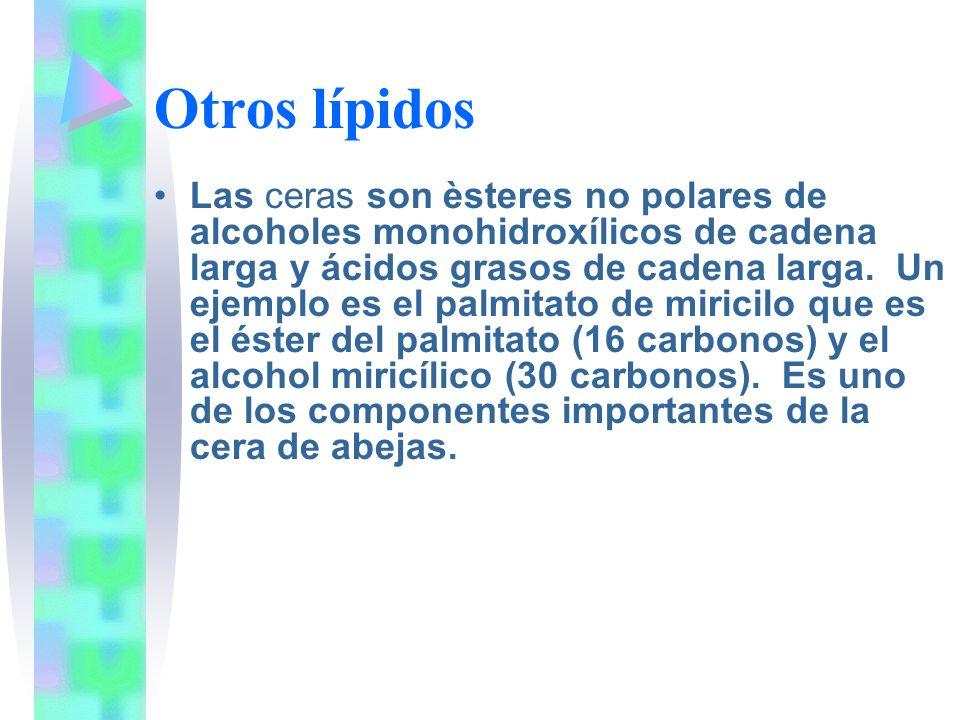 Otros lípidos Las ceras son èsteres no polares de alcoholes monohidroxílicos de cadena larga y ácidos grasos de cadena larga. Un ejemplo es el palmita