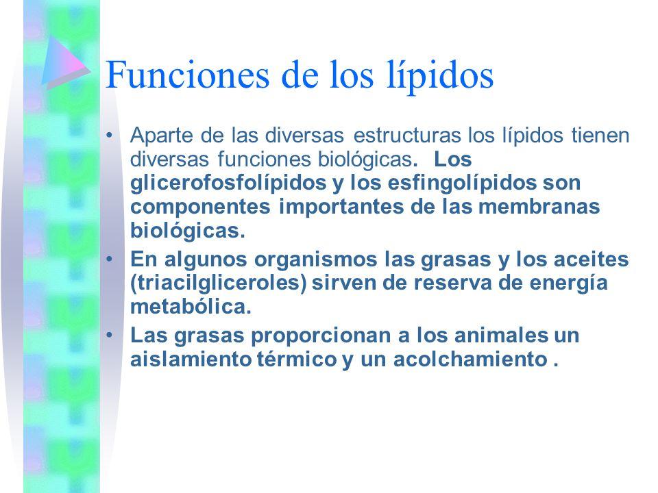 Funciones de los lípidos Aparte de las diversas estructuras los lípidos tienen diversas funciones biológicas. Los glicerofosfolípidos y los esfingolíp