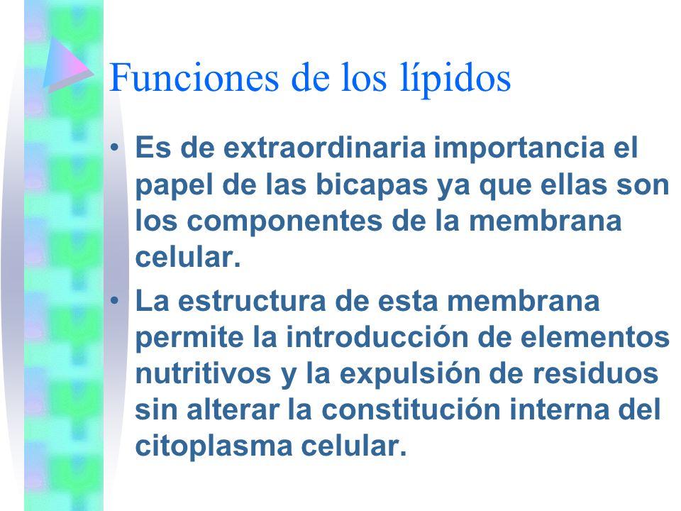 Funciones de los lípidos Es de extraordinaria importancia el papel de las bicapas ya que ellas son los componentes de la membrana celular. La estructu