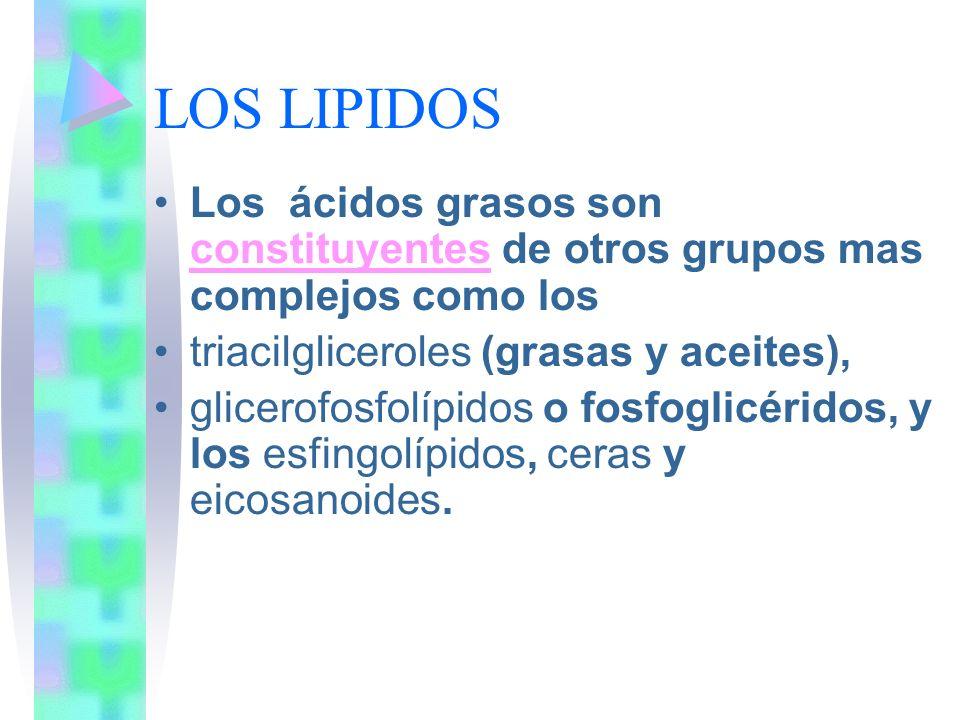 LOS LIPIDOS Los ácidos grasos son constituyentes de otros grupos mas complejos como los constituyentes triacilgliceroles (grasas y aceites), glicerofo