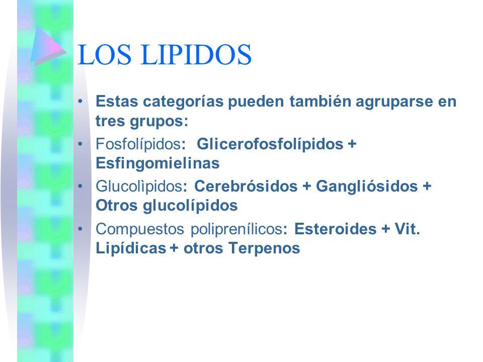 LOS LIPIDOS Estas categorías pueden también agruparse en tres grupos: Fosfolípidos: Glicerofosfolípidos + Esfingomielinas Glucolìpidos: Cerebrósidos +