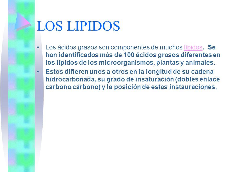 LOS LIPIDOS Los ácidos grasos son componentes de muchos lípidos. Se han identificados más de 100 ácidos grasos diferentes en los lípidos de los microo
