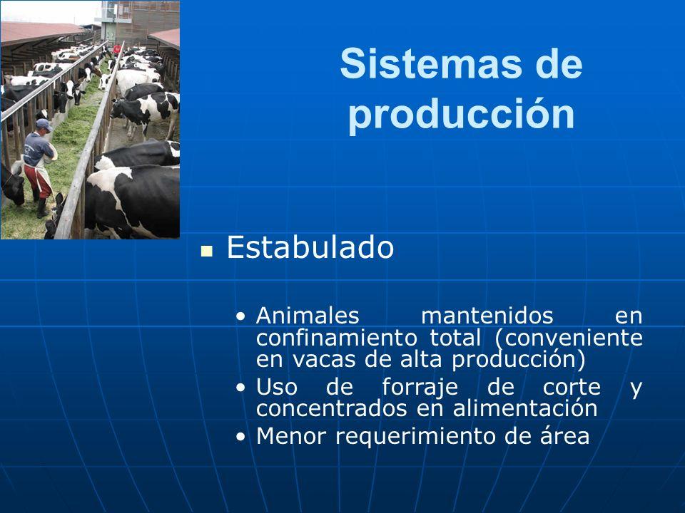 Sistemas de producción Estabulado Animales mantenidos en confinamiento total (conveniente en vacas de alta producción) Uso de forraje de corte y concentrados en alimentación Menor requerimiento de área