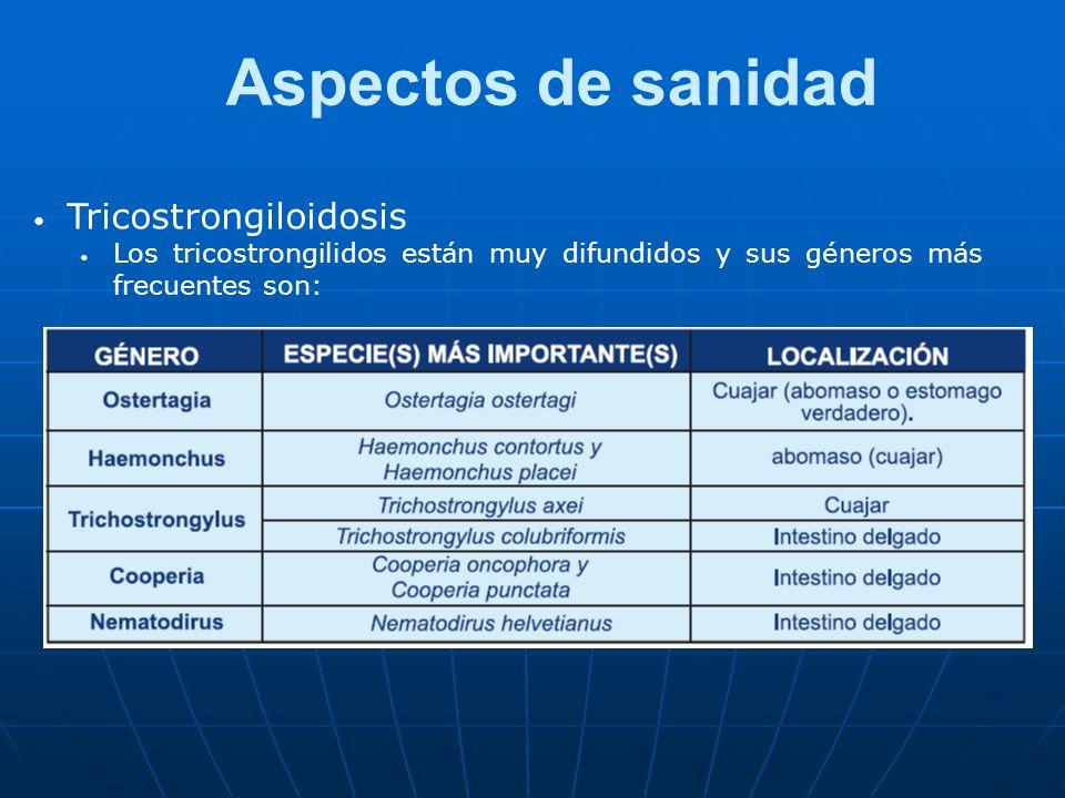 Aspectos de sanidad Tricostrongiloidosis Los tricostrongilidos están muy difundidos y sus géneros más frecuentes son: