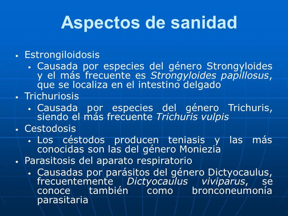 Aspectos de sanidad Estrongiloidosis Causada por especies del género Strongyloides y el más frecuente es Strongyloides papillosus, que se localiza en el intestino delgado Trichuriosis Causada por especies del género Trichuris, siendo el más frecuente Trichuris vulpis Cestodosis Los céstodos producen teniasis y las más conocidas son las del género Moniezia Parasitosis del aparato respiratorio Causadas por parásitos del género Dictyocaulus, frecuentemente Dictyocaulus viviparus, se conoce también como bronconeumonía parasitaria