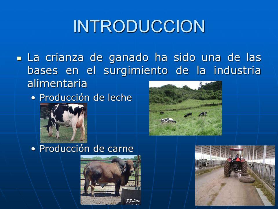 INTRODUCCION La crianza de ganado ha sido una de las bases en el surgimiento de la industria alimentaria La crianza de ganado ha sido una de las bases en el surgimiento de la industria alimentaria Producción de lecheProducción de leche Producción de carneProducción de carne