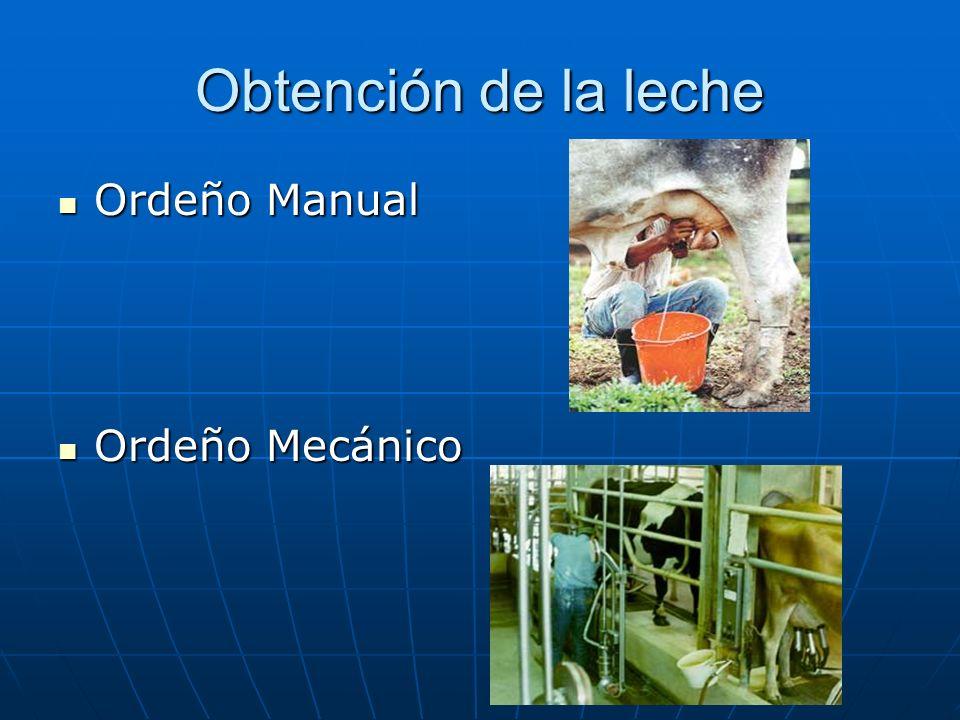 Obtención de la leche Ordeño Manual Ordeño Manual Ordeño Mecánico Ordeño Mecánico