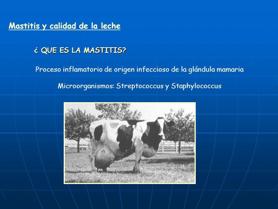 Mastitis y calidad de la leche ¿ QUE ES LA MASTITIS.