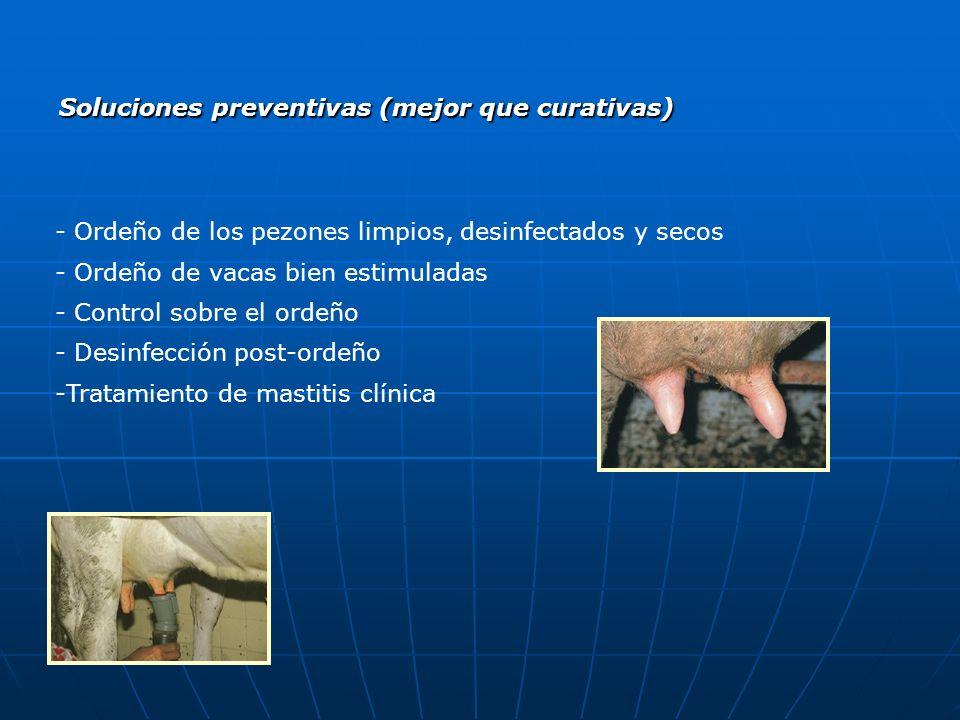 Soluciones preventivas (mejor que curativas) - Ordeño de los pezones limpios, desinfectados y secos - Ordeño de vacas bien estimuladas - Control sobre el ordeño - Desinfección post-ordeño -Tratamiento de mastitis clínica