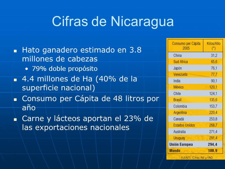 Cifras de Nicaragua Hato ganadero estimado en 3.8 millones de cabezas 79% doble propósito 4.4 millones de Ha (40% de la superficie nacional) Consumo per Cápita de 48 litros por año Carne y lácteos aportan el 23% de las exportaciones nacionales