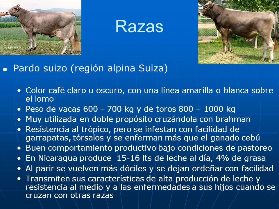 Razas Pardo suizo (región alpina Suiza) Color café claro u oscuro, con una línea amarilla o blanca sobre el lomo Peso de vacas 600 - 700 kg y de toros