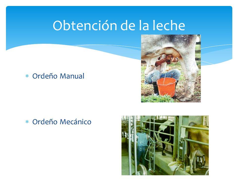 Ordeño Manual Ordeño Mecánico Obtención de la leche