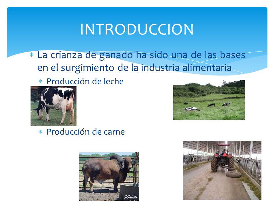 La crianza de ganado ha sido una de las bases en el surgimiento de la industria alimentaria Producción de leche Producción de carne INTRODUCCION