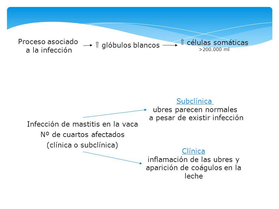 Proceso asociado a la infección glóbulos blancos células somáticas >200.000 ml Infección de mastitis en la vaca Nº de cuartos afectados (clínica o sub