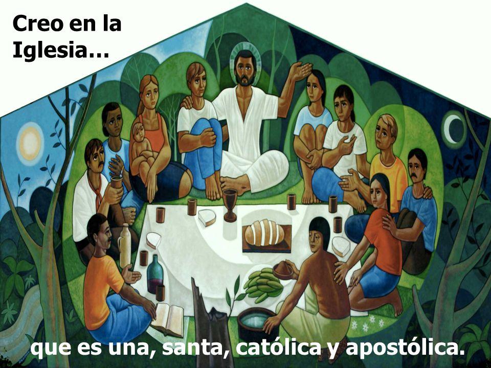 Creo en la Iglesia… que es una, santa, católica y apostólica.