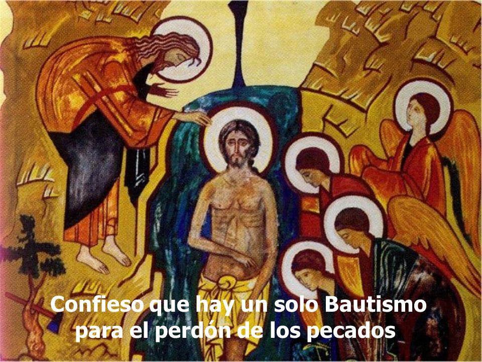 Confieso que hay un solo Bautismo para el perdón de los pecados.