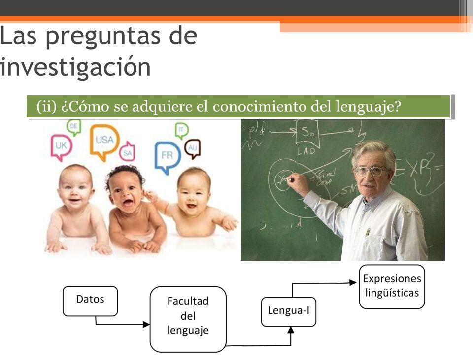 Las preguntas de investigación (ii) ¿Cómo se adquiere el conocimiento del lenguaje?