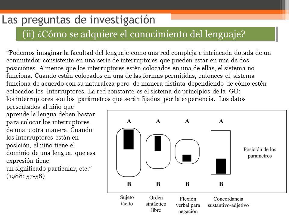 Las preguntas de investigación (ii) ¿Cómo se adquiere el conocimiento del lenguaje? Podemos imaginar la facultad del lenguaje como una red compleja e