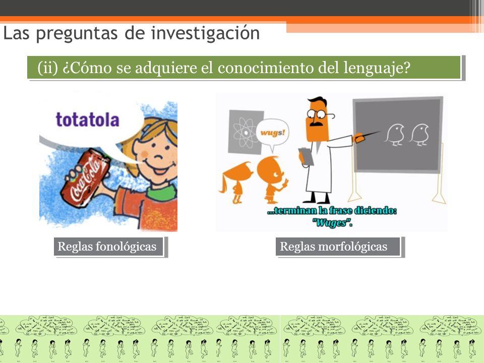 Las preguntas de investigación (ii) ¿Cómo se adquiere el conocimiento del lenguaje? Reglas fonológicas Reglas morfológicas