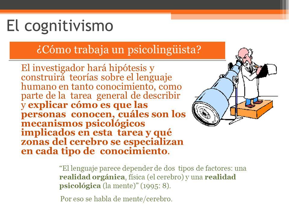 El cognitivismo ¿Cómo trabaja un psicolingüista? El investigador hará hipótesis y construirá teorías sobre el lenguaje humano en tanto conocimiento, c