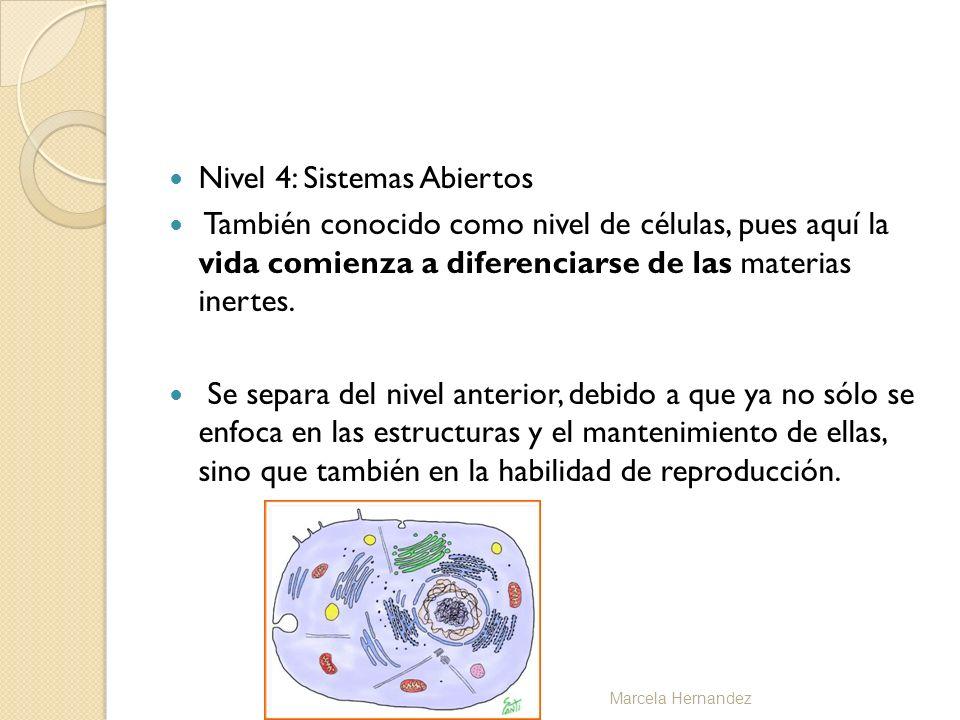 Nivel 4: Sistemas Abiertos También conocido como nivel de células, pues aquí la vida comienza a diferenciarse de las materias inertes. Se separa del n