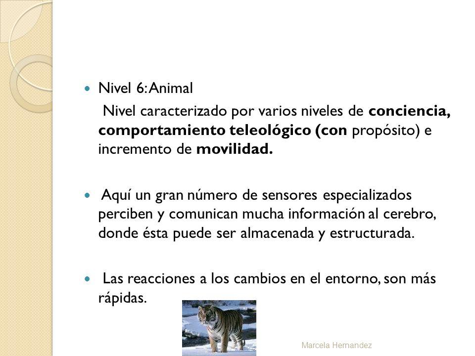 Nivel 6: Animal Nivel caracterizado por varios niveles de conciencia, comportamiento teleológico (con propósito) e incremento de movilidad. Aquí un gr