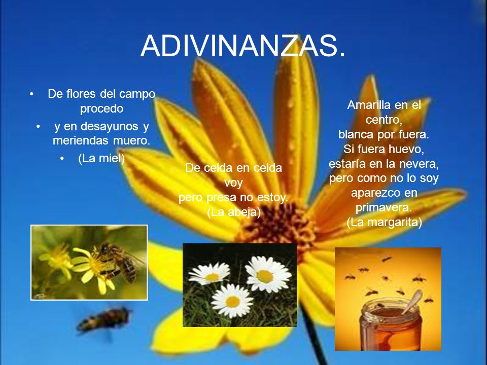 ADIVINANZAS. De flores del campo procedo y en desayunos y meriendas muero. (La miel) De celda en celda voy pero presa no estoy. (La abeja) Amarilla en