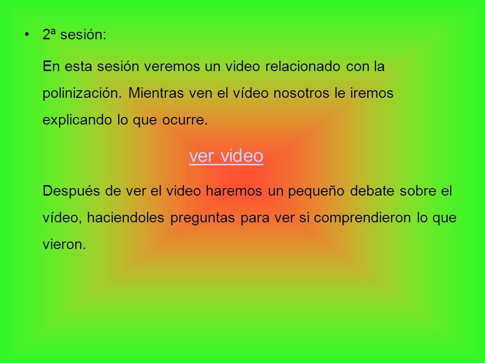 2ª sesión: En esta sesión veremos un video relacionado con la polinización. Mientras ven el vídeo nosotros le iremos explicando lo que ocurre. ver vid