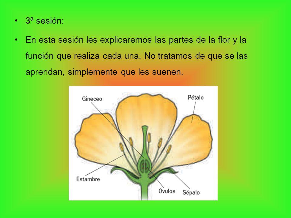 3ª sesión: En esta sesión les explicaremos las partes de la flor y la función que realiza cada una. No tratamos de que se las aprendan, simplemente qu