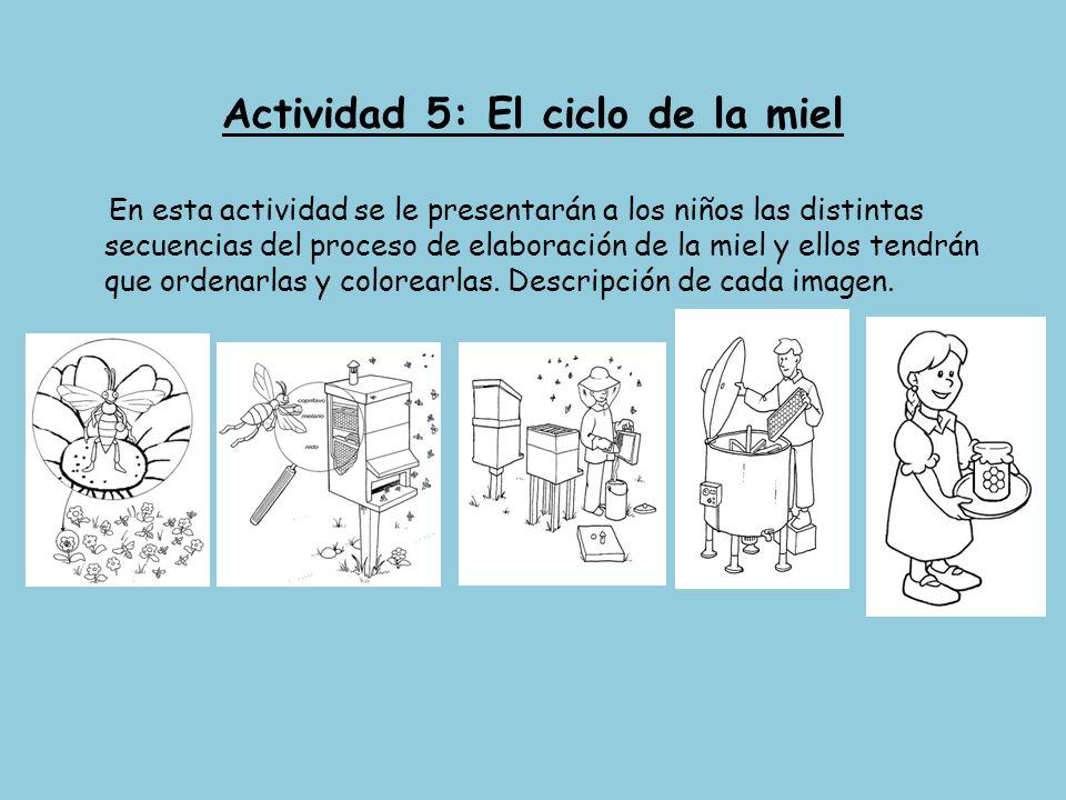 Actividad 5: El ciclo de la miel En esta actividad se le presentarán a los niños las distintas secuencias del proceso de elaboración de la miel y ello