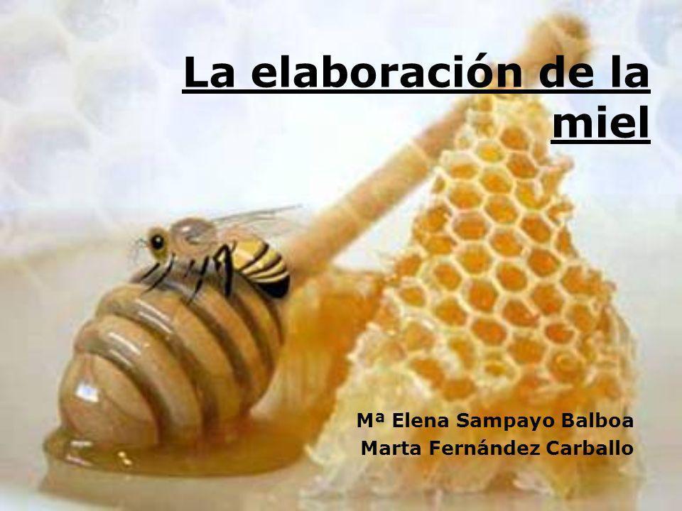 La elaboración de la miel Mª Elena Sampayo Balboa Marta Fernández Carballo