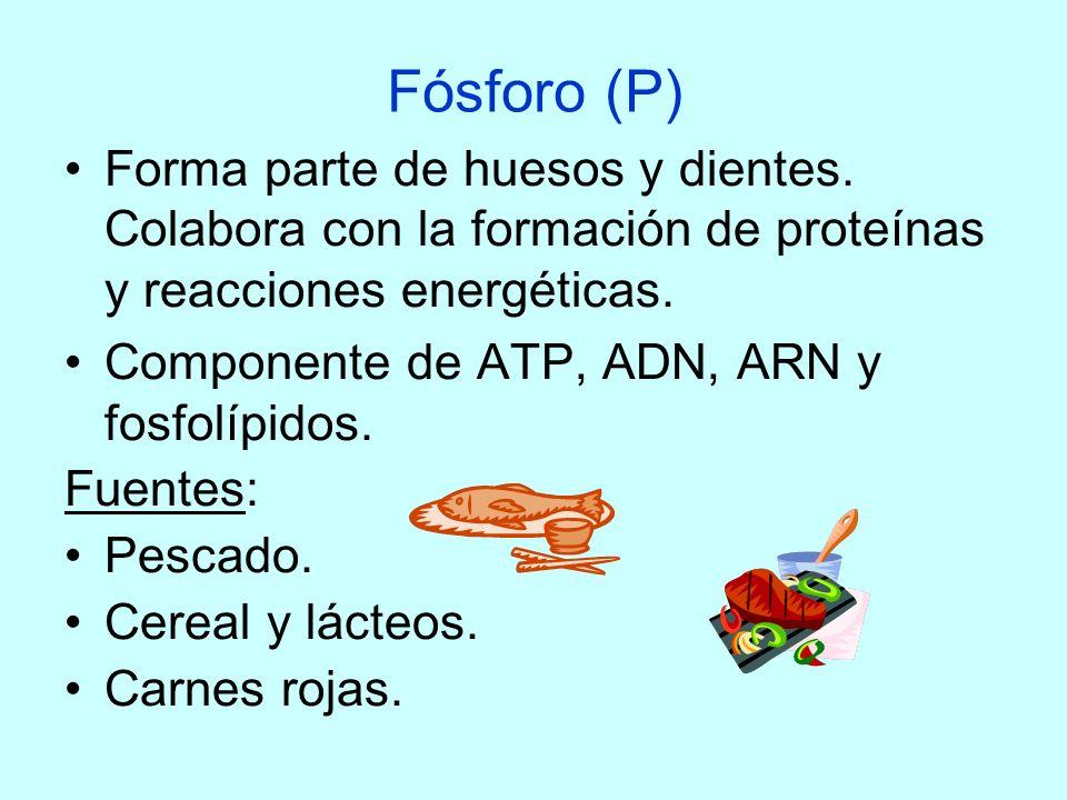Fósforo (P) Forma parte de huesos y dientes. Colabora con la formación de proteínas y reacciones energéticas. Componente de ATP, ADN, ARN y fosfolípid