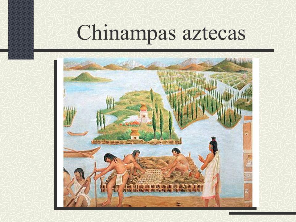 Chinampas aztecas