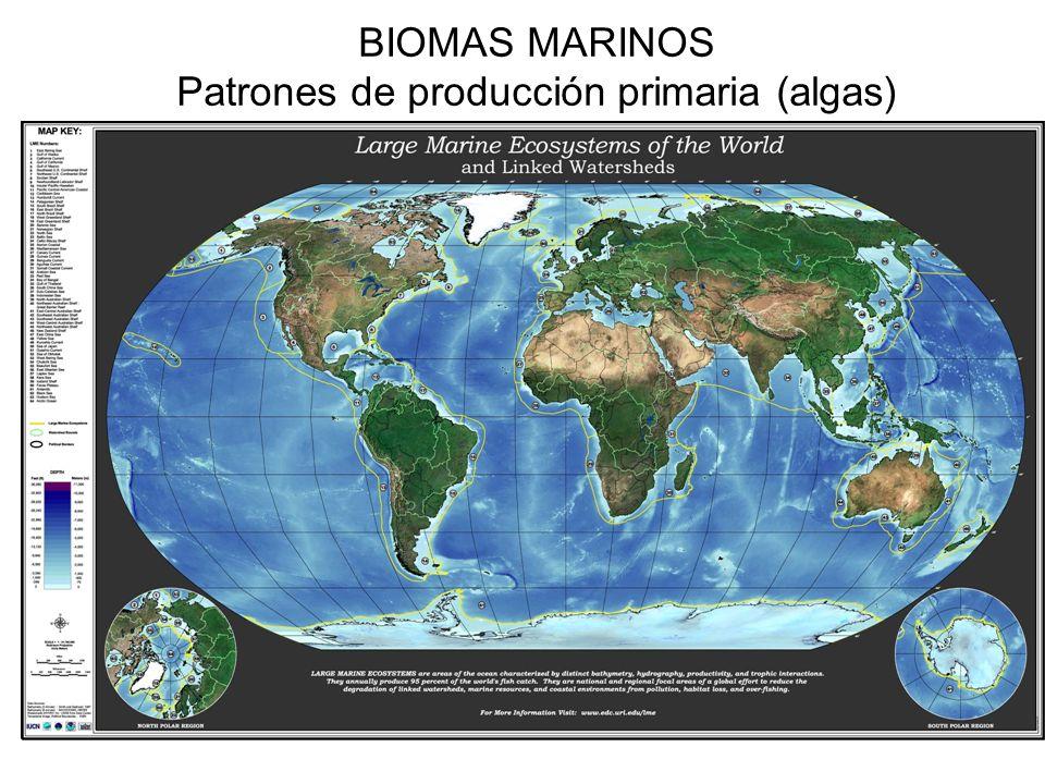 BIOMAS MARINOS Patrones de producción primaria (algas)
