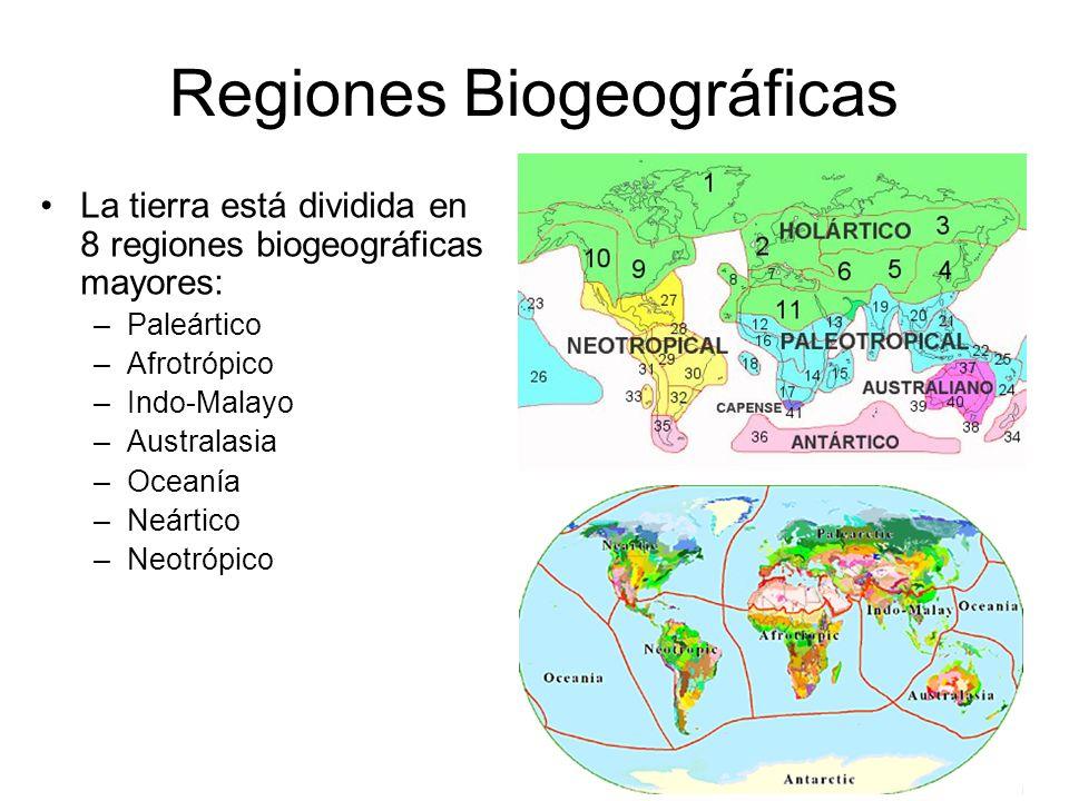 Regiones Biogeográficas La tierra está dividida en 8 regiones biogeográficas mayores: –Paleártico –Afrotrópico –Indo-Malayo –Australasia –Oceanía –Neá