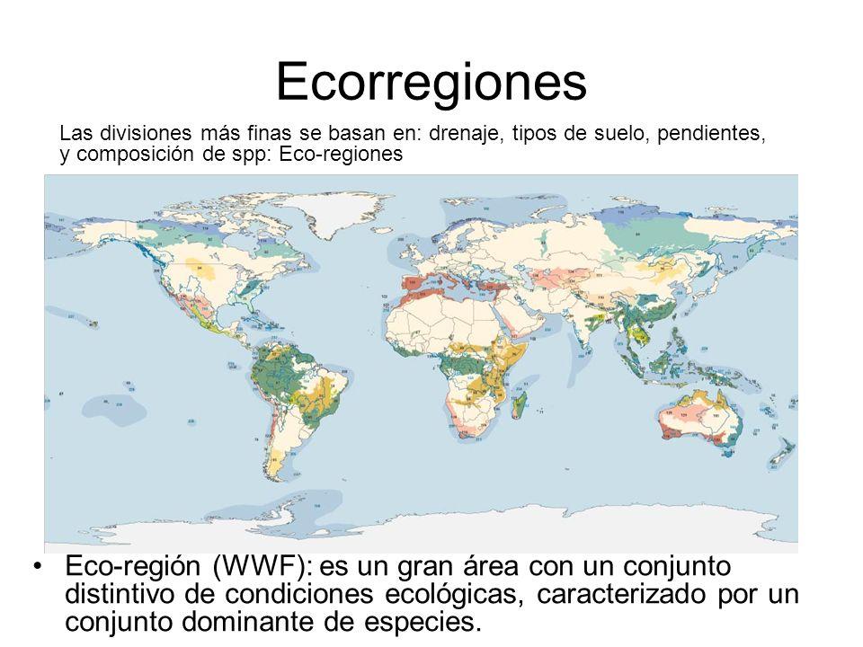 Ecorregiones Las divisiones más finas se basan en: drenaje, tipos de suelo, pendientes, y composición de spp: Eco-regiones Eco-región (WWF): es un gra