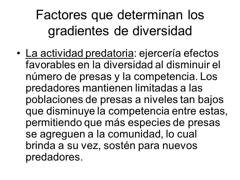Factores que determinan los gradientes de diversidad La actividad predatoria: ejercería efectos favorables en la diversidad al disminuir el número de